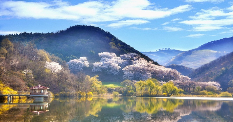 How to Apply for a South Korean Tourist Visa