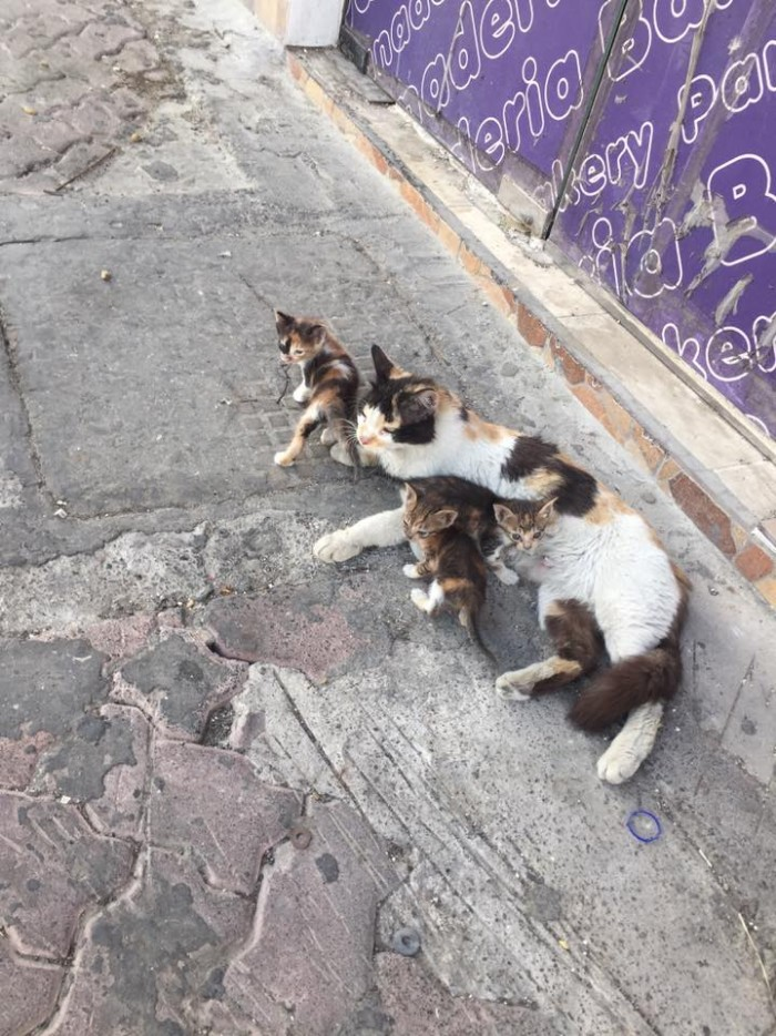 cats-ofw-feeds