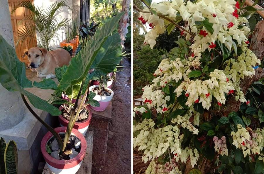 Katas ng OFW Domestic Helper in Dubai Builds 4 Bedroom House and Flower Business